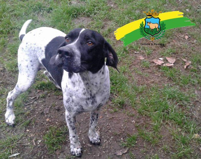 Il nome che gli è stato dato in canile è Lazzaro perché quando è arrivato da noi era l' ombra del bellissimo pelosone che è ora. E' un cane simpatico, intelligente, dinamico, socievole e molto bello.